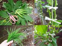 台風対策 結ぶ~葉を落とす~早めの収穫 - NATURALLY