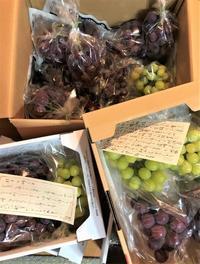 モタモタしながら葡萄の荷造り… - 島暮らしのケセラセラ