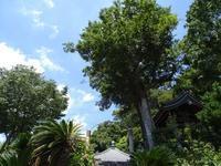 薬王寺と薬勝寺、どちらが古い?飛鳥時代の丸瓦が出土  Which is older, Yakuoji Temple or Yakushoji Temple? - 熊野古道 歩きませんか? / Let's walk Kumano Kodo