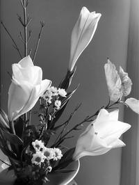 お花が輝くとき - 自然を見つめて自分と向き合う心の花