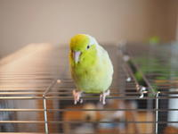 鳥かご変更 - Wild Birding