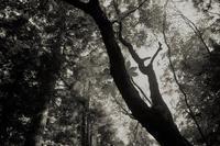 森の中で - 旅する       memephoto
