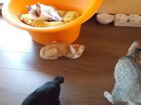 福岡の警固と吉塚に猫カフェ - ネコと文学と猫ブンガク