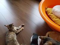 トム・カリー 選手は猫カフェに行きたかった - ネコと文学と猫ブンガク