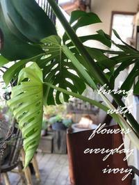 本日もSTARTです〜♬ -  Flower and cafe 花空間 ivory (アイボリー)