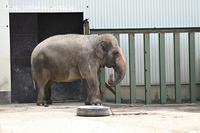 2020年8月王子動物園その1 - ハープの徒然草