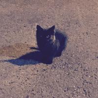 野良猫黒ちゃん - かかさんの気まぐれ日記