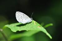 6月に出会った蝶たち* - *la nature*