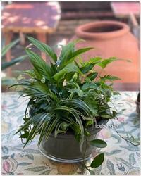 観葉植物で涼しげに。。。。 - 小さな庭 2