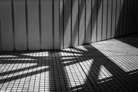 直線的だが柔らかな真夏の光蜥蜴 - Silver Oblivion