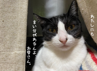 はちわれくりちゃん  理由があるねん - gin~tetsu~nosuke