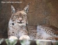 2020年8月王子動物園その2 - ハープの徒然草