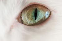 瞳と空 - Omoブログ