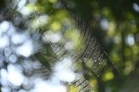クモの巣 - ささつぶ
