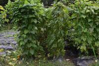 自然栽培台風が心配人参みんなの家 - 自然栽培 釧路日記