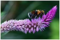 蜂の目 -  one's  heart