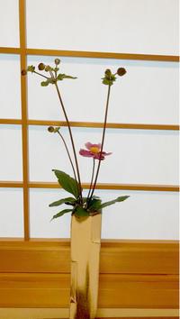台風10号通過中 - 自然を見つめて自分と向き合う心の花