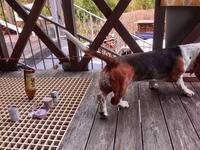ターシャちゃん進入禁止 - 湖畔に暮らすミュージシャンと愛犬ハンク/ターシャの日記