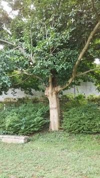 秋の辛夷 (こぶし)の真っ赤な実 - 台町公園ブログ