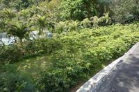 楽園へ  8   ~コーヒー体験ツアーで最高の1杯を~ - 美鈴とトラと私とお庭