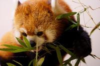 長野市茶臼山動物園にて - 野沢温泉とその周辺いろいろ2