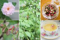 Garden Story(ガーデンストーリー)さんにて「実録!バラがメインの庭づくり第8話」がアップ頂きました。 -  日本ローズライフコーディネーター協会