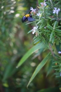 ハチさん見つけた。 - 平凡な日々の中で