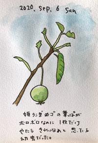 幼虫 - 一天一画   Yuki Goto