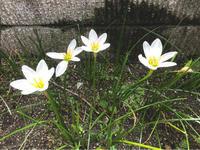 シンプルな暮らし - 自然を見つめて自分と向き合う心の花