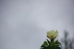 台風10号の影響でまとまった雨が降った -