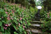シュウカイドウの咲くお寺岩湧寺 - 峰さんの山あるき