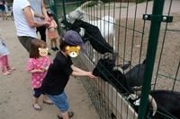 動物も居る恐竜パーク ~Tier-Freizeit-und Urzeit-Park~ - チーム名はファミリエ・ベア ~ハイジが記すクマ達との日々~