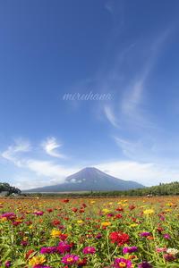 花の都公園あの日あの時。 - MIRU'S PHOTO