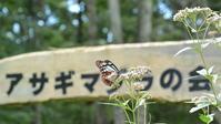 蝶の楽園にアサギマダラ来る / 秋風の浅間高原 - 2020 浅間暮らし(ヤマキチョウ便り)