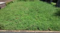 クラピア刈り4回目 - ウィズコロナのうちの庭の備忘録~Green's Garden~