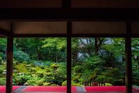 三千院の秋海棠 - 鏡花水月