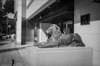 カンガルーに入れ替わったライオン - Silver Oblivion