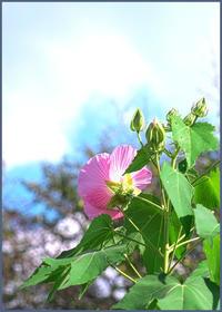 花と蝶 - ☆彡 四季写遊 ☆彡