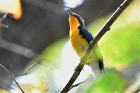 森の鳥さん - 鳥と共に日々是好日②