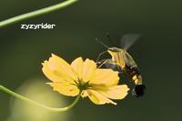 秋の気配(その1) - ジージーライダーの自然彩彩