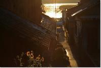 秋を感じる路地の朝 - ハチミツの海を渡る風の音