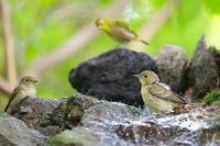 小鳥の世界に差別はない - 上州自然散策3