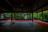 晩夏の宝泉院の秋海棠 - 鏡花水月