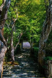 寂光院の秋海棠 - 鏡花水月