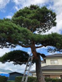 秋の庭木手入れ - 三楽 3LUCK 造園設計・施工・管理 樹木樹勢診断・治療