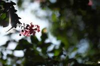 秋の朝 - 節操のない写真館