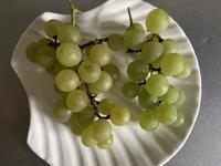 葡萄ナイアガラの収穫で思うこと… - いととはり