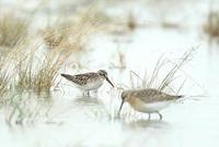 キリアイ - 北の野鳥たち