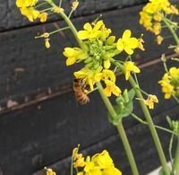 初春、風強し/ It's Spring Time For Bees And New Zealand〜🌸 - アメリカからニュージーランドへ