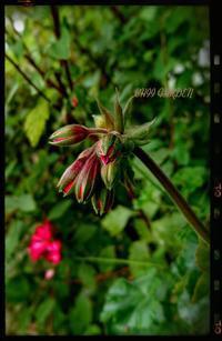 「どん○け~((☝))」な髪型と、連杭で簡単花壇❁ - どんぐりの木の下で……